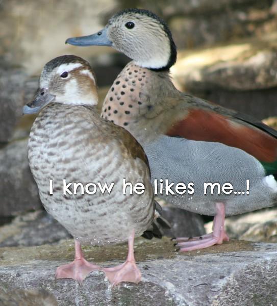 I know he likes me-2