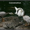 conversation trio 2 25 06 PM