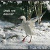Shallwe_ dance 2 25 06 PM