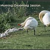 Fb- morning grooming session-Lowbeer 2 25 06 PM