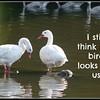 i still say that bird lks lk us 2 25 06 PM