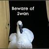 Beware of Swan 2 25 06 PM