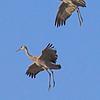 Sandhill Cranes taken Mar 21, 2010 near Delta, CO.