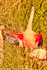 A Chilean Flamingo taken Feb. 26, 2012 in Tucson, AZ.