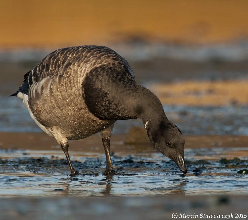 Feeding in the mud