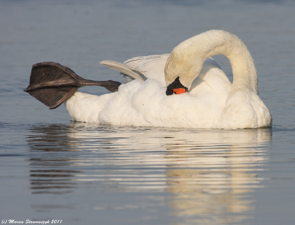 Stretching and preening
