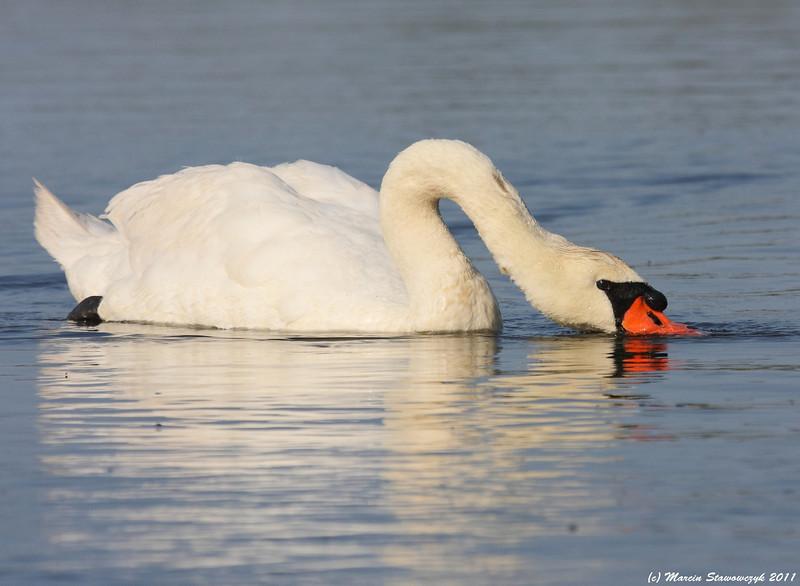 Filtering swan