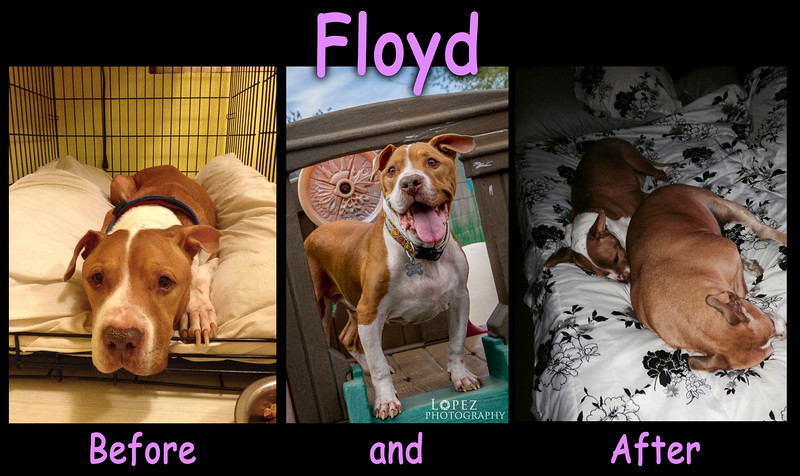 Underdog Floyd has been Adopted!