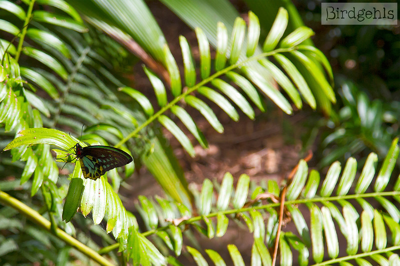 melbourne zoo butterflies