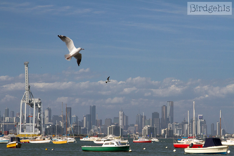 melbs skyline from williamstown