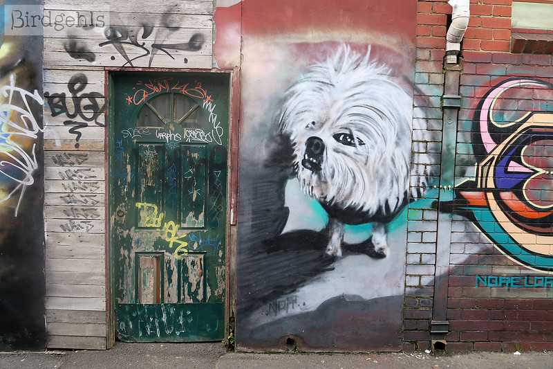 dog painting brunswick