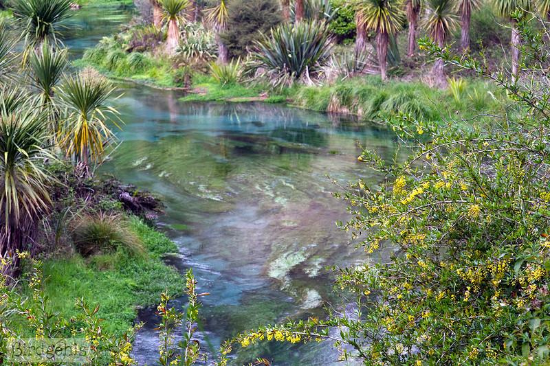 the Putaruru Blue Spring