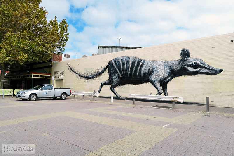 roa numbat fremantle