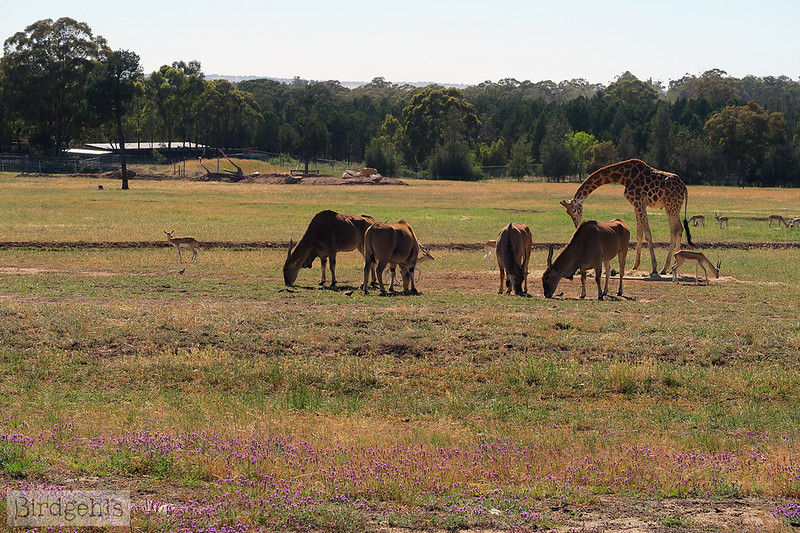 taronga-western-plains-zoo