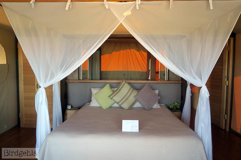 dubbo zoo accommodation