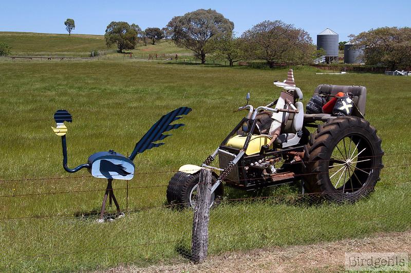 animals-on-bikes