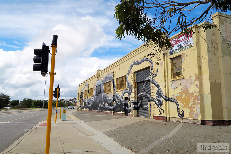 street art in perth kraken