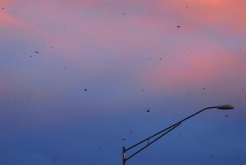 Salmonfly Fever - Gardiner, MT