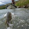 Charlie Eubank, salmonflies up high