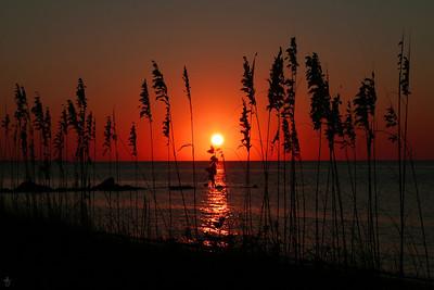 'See Oats' Ocracoke Island, NC