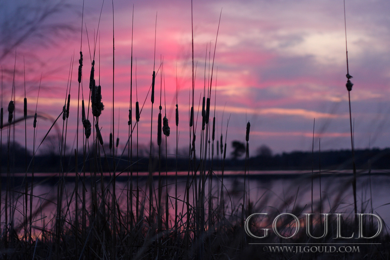 Cattails In The Sunrise
