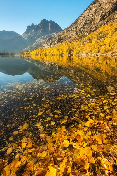 Silver Lake aspens, June Lake Loop