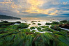 Seagrass sunset, Palos Verdes CA