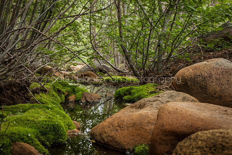 Moss Creek-Galena Creek Forest