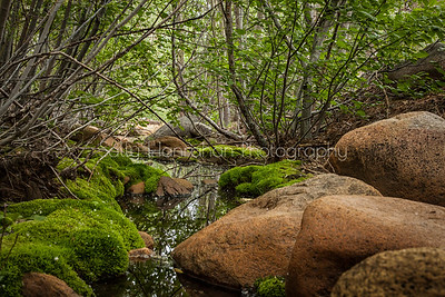 Moss Creek ~ Galena Creek Forest