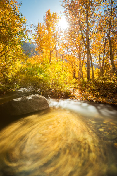 McGee Creek aspen swirl