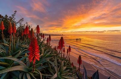 Red Aloe Burner