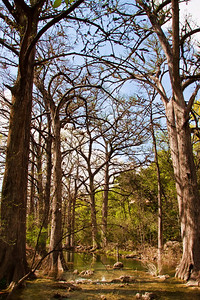 Tall Trees of Hamilton Pool State Park