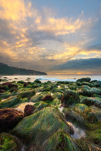 Low tide seagrass at sunset, Palos Verdes CA