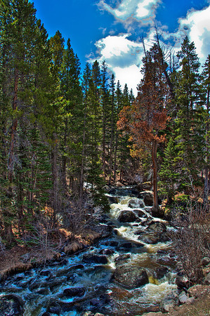 Babbling Brook in Rocky Mountain National Park
