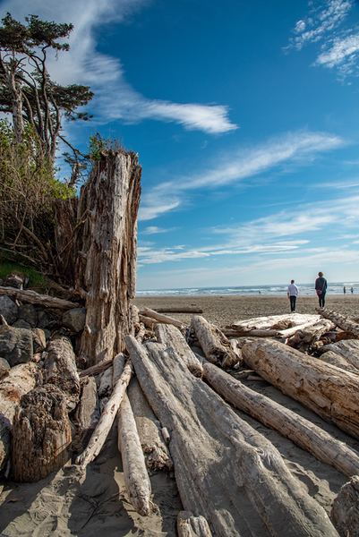 Washington Driftwood