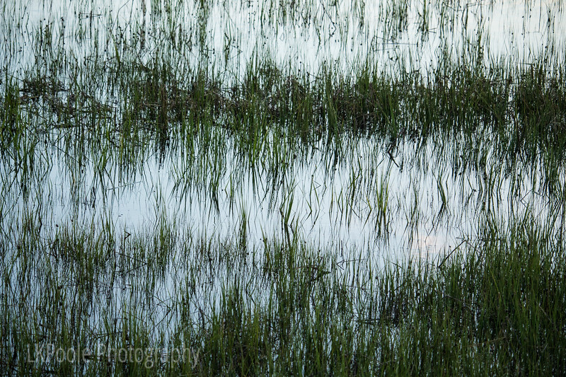 Marsh Grass in the Evening