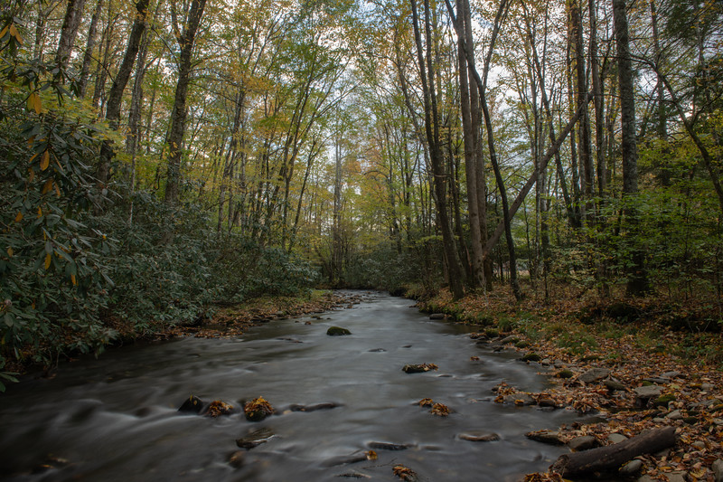 Rough Creek