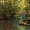 Quiet Stream - Cataloochee Valley