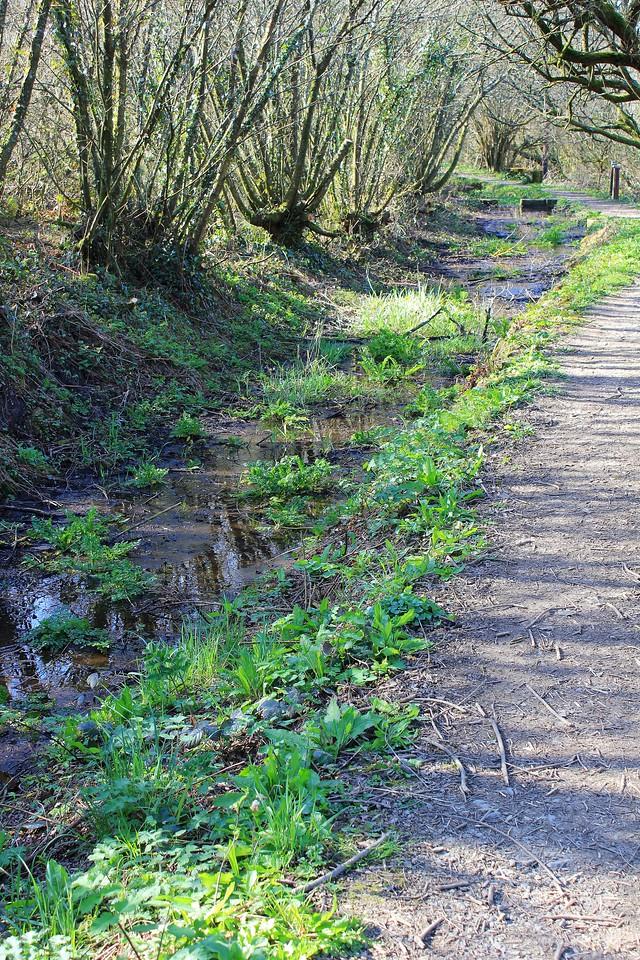 Bude Canal – Virworthy