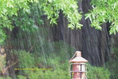 rain 061