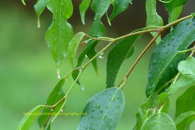 rain 035