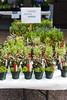 Watnong Plant Sitting 65