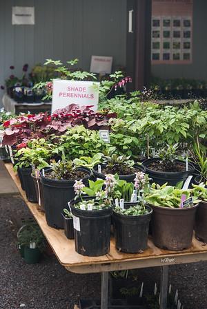 Watnong Plant Sitting 69