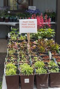 Watnong Plant Sitting 67