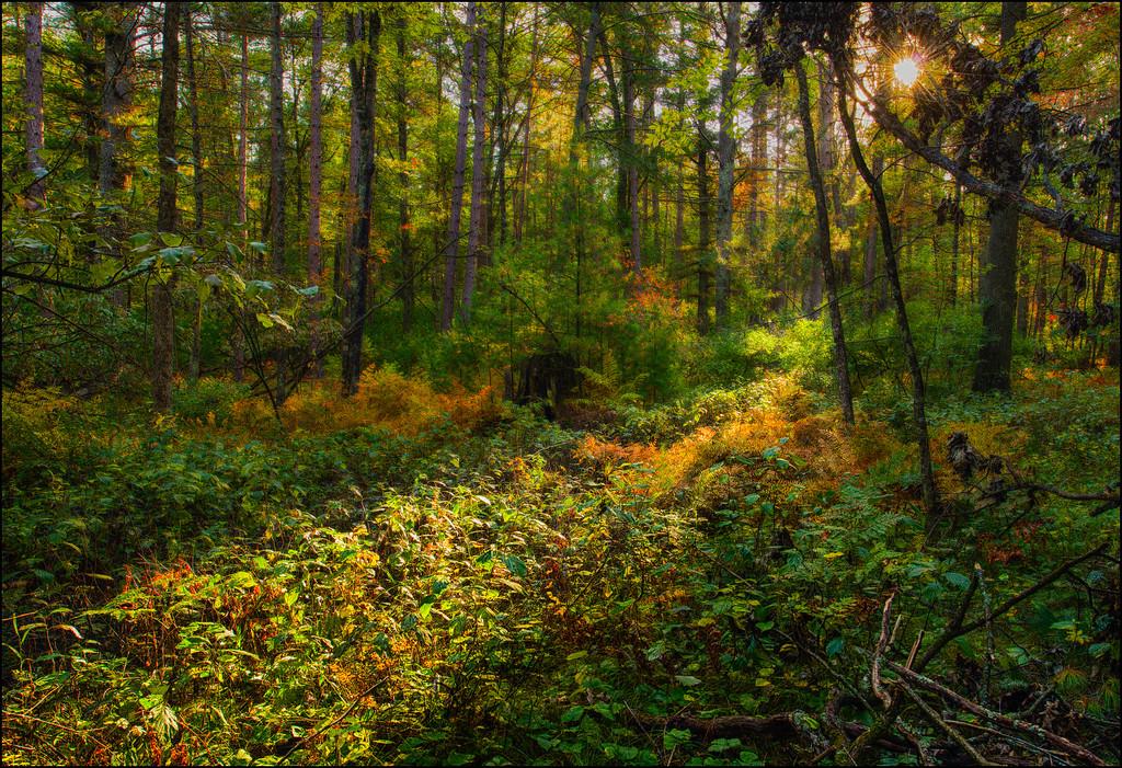 Sunrise Light In Fall Forest