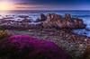 Purple Carpet at Kissing Rock