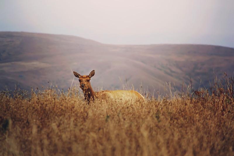 Elk Girl