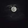Pinnk Moon