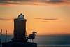 Seagull Coast Guards
