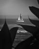Cool Sailing in Santa Cruz